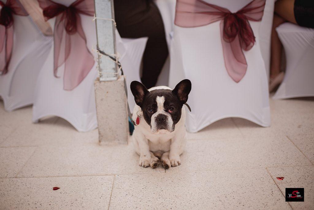 Hochzeitsfoto STUDIO VISION C 17